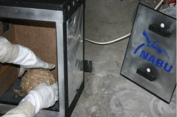 wespen gas gr ser im k bel berwintern. Black Bedroom Furniture Sets. Home Design Ideas